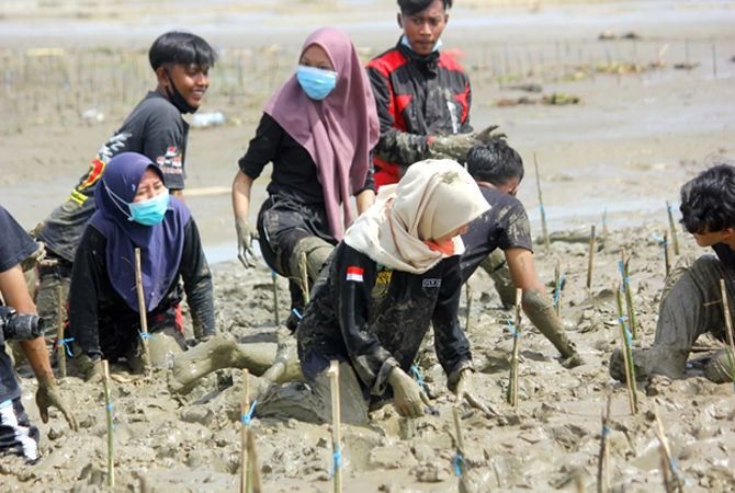 TANAM MANGROVE: Para peserta sekolah ekologi melakukan aksi tanam mangrove di Pantai Kertomulyo Kecamatan Trangkil Sabtu (31/10) lalu.