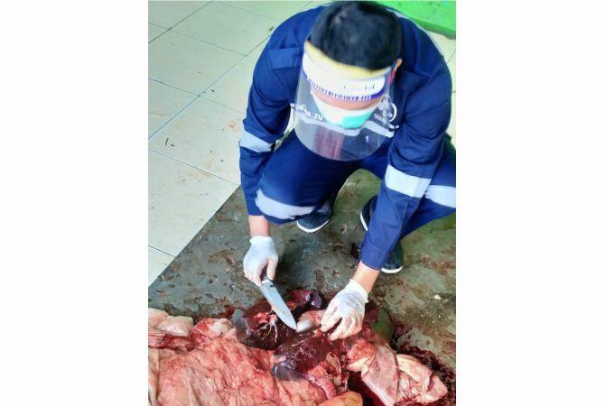 TEMUAN:  Petugas dari Tim Bidang Peternakan dan Kesehatan Hewan, Dinas Pertanian dan Pangan Kabupaten Rembang saat melakukan pemeriksaan ternak yang dipotong untuk kurban.
