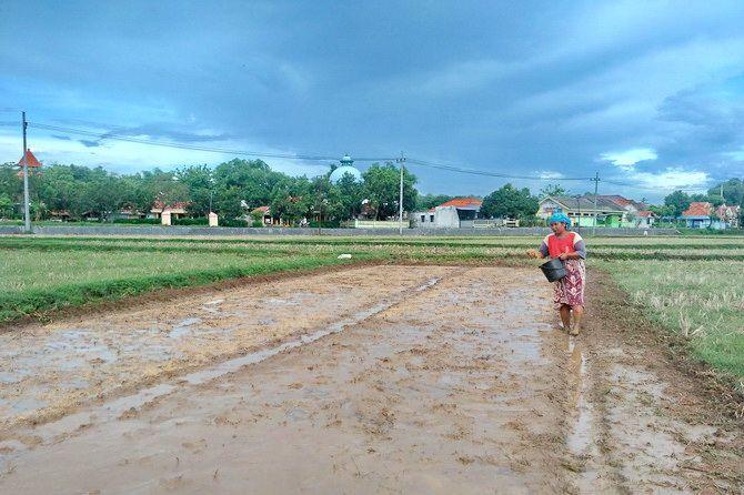 BAKAL MEMBUTUHKAN PUPUK: Seorang petani menabur benih padi di Desa Buluh, Kecamatan Socah.