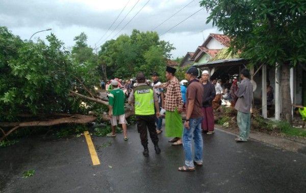KERJA KERAS: Tim BPBD Sampang mengevakuasi pohon tumbang.