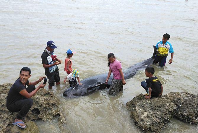 PUSAT PERHATIAN: Seekor paus pilot mati menjadi mainan anak-anak di Dusun Baton, Desa Patereman, Kecamatan Modung, Bangkalan, kemarin.