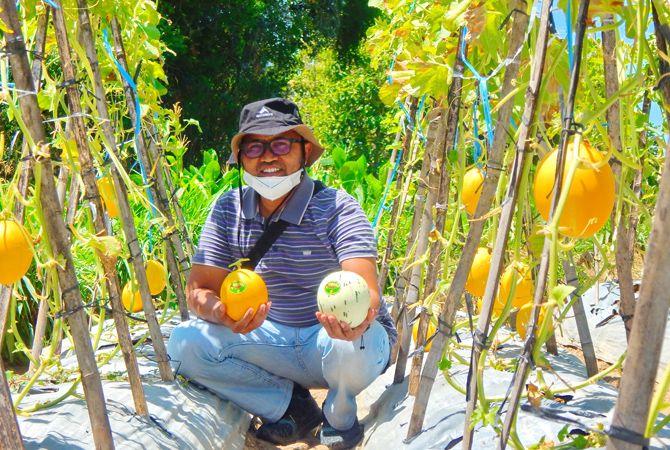 KREATIF: Jamaludin menunjukkan buah melon di objek Wisata Petik Melon, Desa Artodung, Kecamatan Galis, Pamekasan, kemarin.