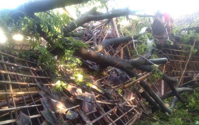 Pohon yang menimpa rumah warga Dusun Sebani, Desa Pesanggrahan, Kec. Kutorejo, Kab. Mojokerto saat dievakuasi oleh relawan.
