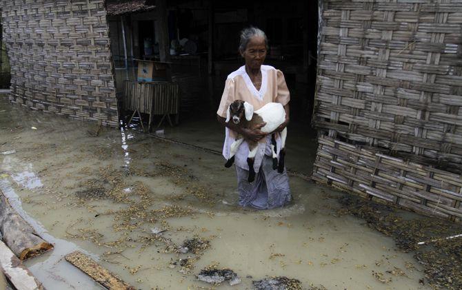 Seorang nenek menyelamatkan kambing ternak setelah rumahnya terendam banjir di Dawarblandong, Kab. Mojokerto.