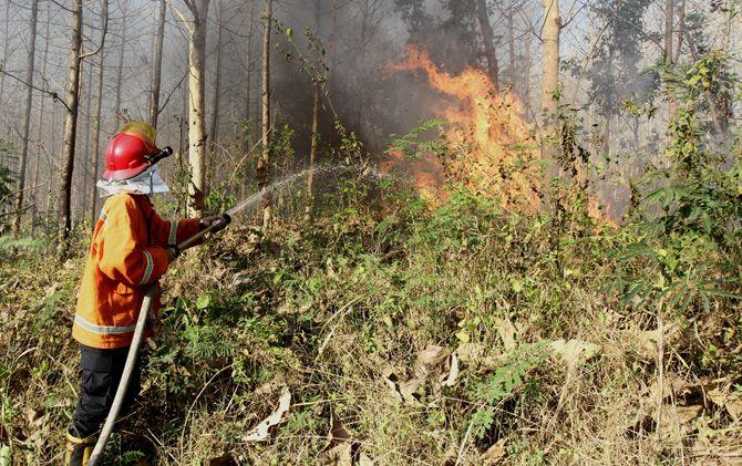 Petugas PMK Kabupaten Mojokerto memadamkan api yang membakar hutan Desa Cendoro, Kabupaten Mojokerto.