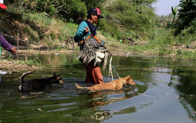 Jack n Jacky menyusuri Kali Lamong memburu sasaran biawak di Desa Sumberwuluh, Kecamatan Dawarblandong, Kabupaten Mojokerto.