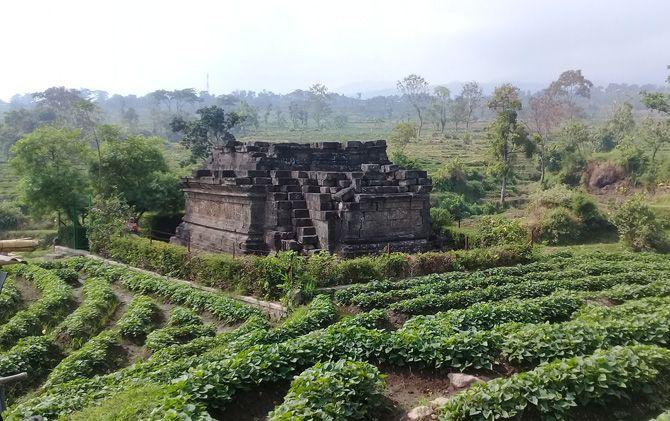 Candi Cungkup di lahan persawahan Dusun Kesiman, Desa Kesimantengah, Kecamatan Pacet.
