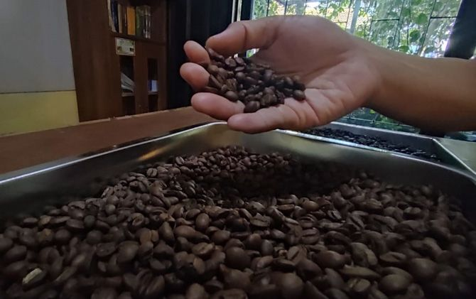 Pengolahan kopi pilihan sebelum melalui proses roasting.