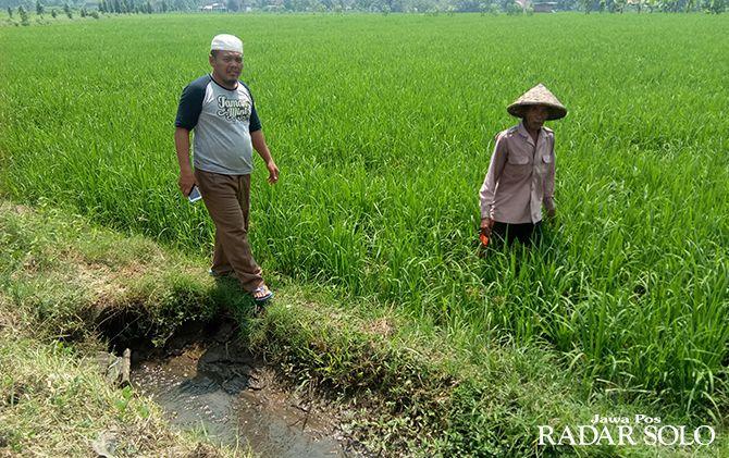 LUMBUNG PADI: Kawasan sawah lestari seluas 42 ribu hektare di Sragen akan dipertahankan.