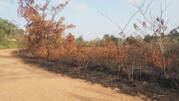 Kemarau Panjang, 27 Kasus Kebakaran