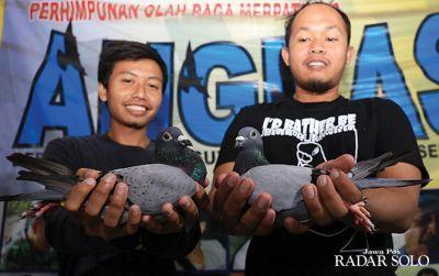 RAS UNGGUL: Merpati pos milik anggota POMP Angkasa Solo rutin jalani latihan.