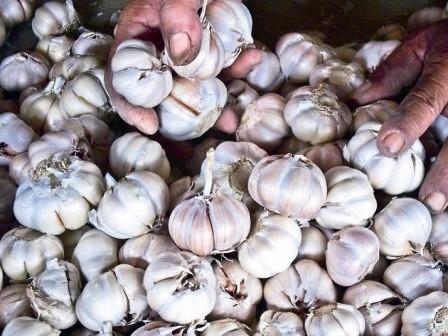 PASOKAN TAK SEIMBANG: Bawang putih menjadi salah satu pendorong utama inflasi Jatim pada bulan Maret 2018. Pasokan komoditi ini di pasaran belum mampu mengimbangi tingginya permintaan sehingga membuat harganya mengalami kenaikan.
