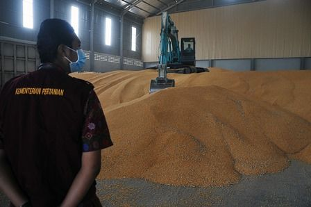 UNTUK PETERNAK: Sejumlah alat berat saat merapikan jagung untuk didistribusikan kepada peternak, saat tiba di Gudang Bulog, Surabaya.