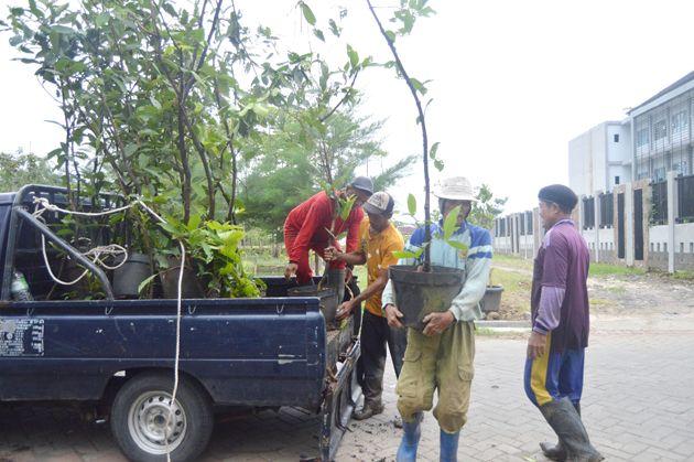 TEKAN POLUSI: Petugas DKRTH menurunkan bibit pohon yang akan ditanam di hutan kota di kawasan Lempung.