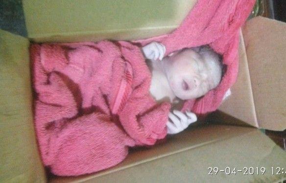 HIDUP: Bayi laki-laki yang ditemukan di dalam kardus di kandang ayam.
