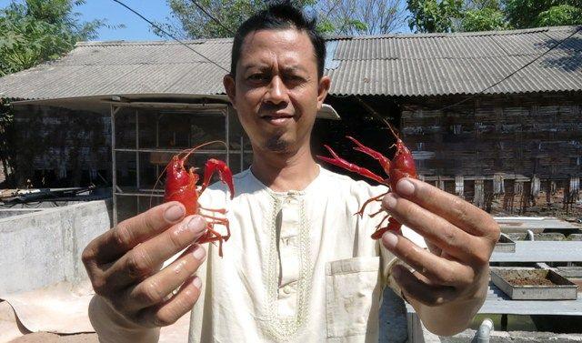 MERAH MENYALA: Zulfikri menunjukkan lobster hias yang dia kembangbiakkan di rumahnya.