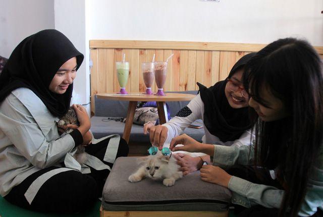BERBAGAI RAS: dari kiri, Zahrotul, Rivanya dan Yasmin bermain-main dengan kucing saat menikmati waktu bersama di salah satu cafe di kawasan Siwalanker