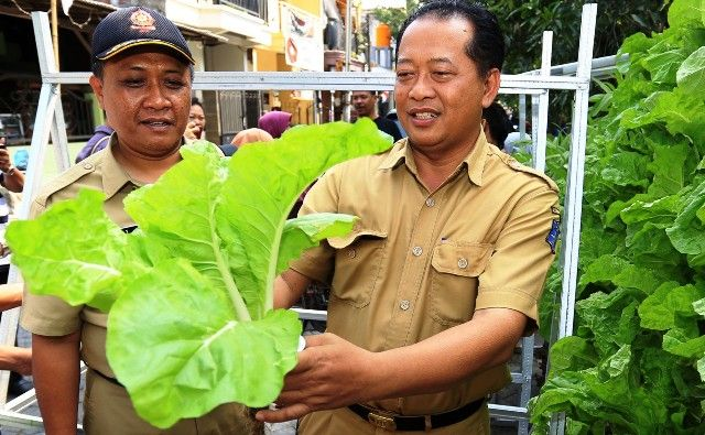 MELIMPAH: Kepala Bidang RTH dan PJU DKRTH Surabaya Hendri Setianto (kanan) memanen sayur hidroponik milik warga saat sosialisasi SSC di Tegal Mulyorejo Baru, Selasa (27/8).