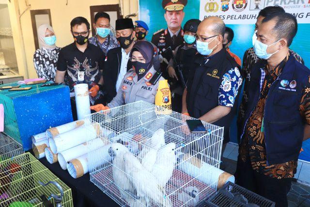 DILINDUNGI: Petugas menunjukkan barang bukti burung langka yang diamankan di Mapolres Pelabuhan Tanjung Perak, Surabaya.