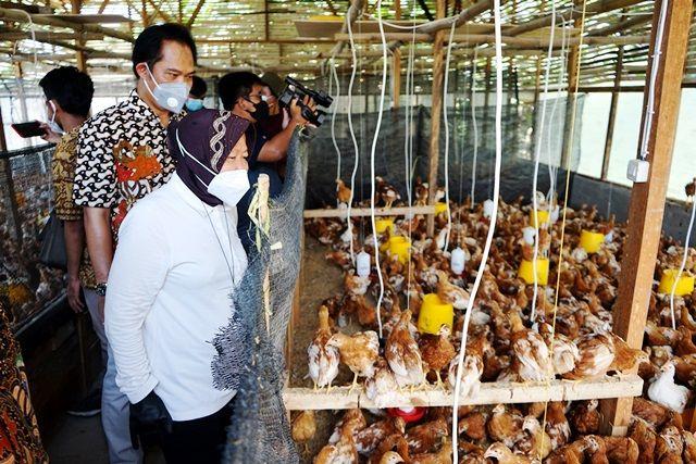 SUMBER GIZI: Tahura Lempung juga dilengkapi tempat peternakan ayam.