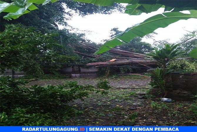 RUSAK : Rumah warga  di Desa Mirigambar, Kecamatan Sumbergempol, tertimpa pohon, Jumat (1/3).