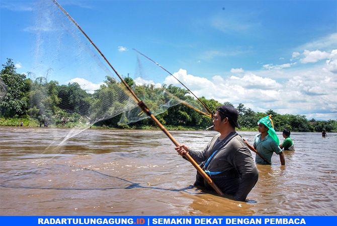 BERBURU : Ratusan warga berebut ikan di Sungai Brantas di Desa/Kecamatan Ngantru. Ikan tersebut mabuk karena air terlalu keruh.