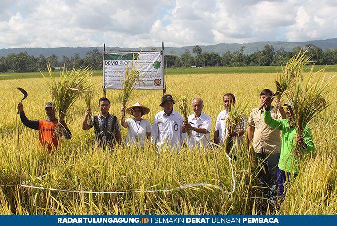 KOMPAK : Panen di Desa Kacangan, Kecamatan Ngunut dari program pendampingan DANA PANDAN, Rabu (27/3).