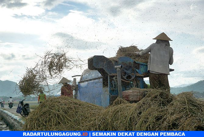 KERJA KERAS: Petani di Desa Bendo, Kecamatan Gondang, sedang merontokkan padi yang baru dipanen.