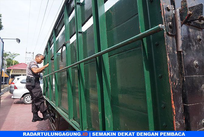 BARANG BUKTI : Kayu sonokeling di truk diduga sebagai pengangkut.
