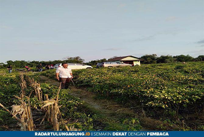 DONGKRAK EKONOMI: Tanaman cabai dan melon salah  satu unggulan Gapoktan Sutojayan.