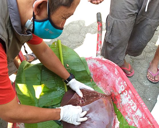 BERBAHAYA: Petugas menunjukkan daging hewan kurban yang tak layak konsumsi karena cacing hati.