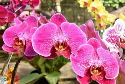 Merawat Bunga Anggrek Rumah Cantik Penghasilan Naik