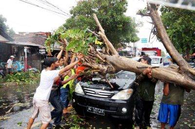 Puting Beliung Kediri, 30 Menit, 1 Tewas, Puluhan Pohon Tumbang