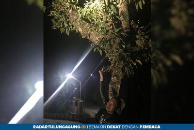 Potong Dahan Pohon Jambu, Remaja Di Blitar Tewas Tersengat Listrik
