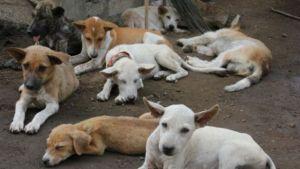Rentan Rabies, Masih Banyak Warga yang Buang Anjing Sembarangan