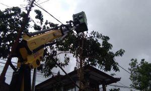 Perlu Skylift Rp 1,5 M, Pangkas Pohon Tinggi Rawan Tumbang