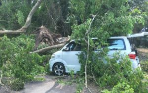 Mobil Travel Ditimpa Pohon di Ubud