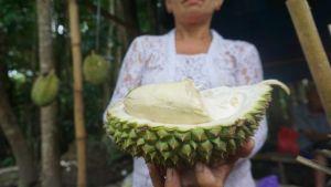 Durian Abang; Rasa Manis-Pahit ala Wine, Bekas Tupai malah Diminati