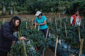 Teman Sayur Rangkul Petani, Edukasi Pembeli di Tengah Pandemic