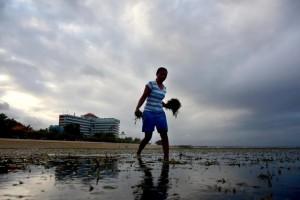 Cari Rumput Laut di Pantai Segara Sanur