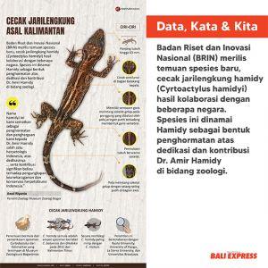 Spesies baru cecak jarilengkung asal Kalimantan