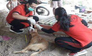 Anjing Gila Kembali Serang Warga, Dinkes Pastikan Positif Rabies