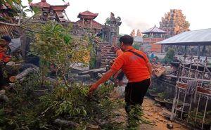Dahan Pohon Tua Keramat Patah Timpa Pelinggih Picu Macet Berjam-jam