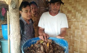Budidaya Maggot Ulat BSF Gunakan Pakan Organik Lewat Youtube