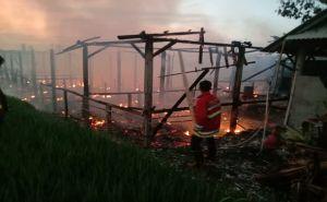 Peternakan Warga Terbakar, Ribuan Ekor Ayam Mati Terpanggang