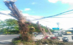 BMKG: Waspadai Petir dan Angin Kencang saat Hujan Lebat