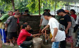 Belasan Hektar Kebun Jagung Petani Buleleng Diserbu Ulat Grayak