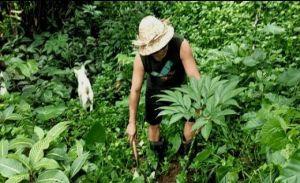 Pasar Menjanjikan, Petani Belatungan Kembangkan Tanaman Porang