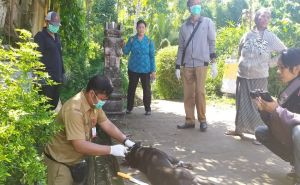 Tiga Orang Warga Dauh Tukad Digigit Anjing Rabies
