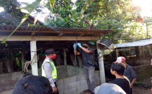 Sesak Nafas dan Batuk, Wanita di Bangli Gantung Diri di Kandang Babi